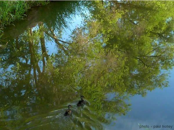 2013-06-25-ducks-2
