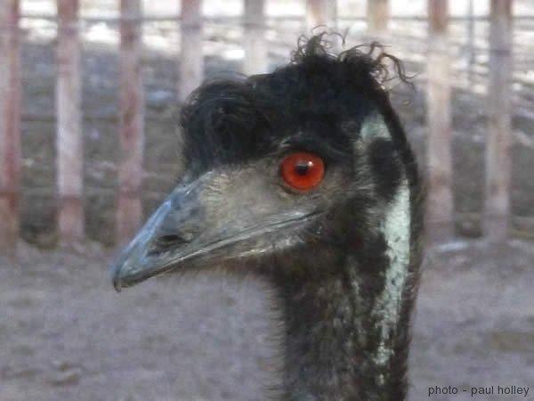 emu-3 albuquerque